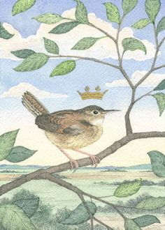 The Royal Wren - Ink and watercolor painting by Carrie Wild