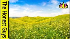 Short Guided Meditation: The Fields of Summer (Time-Out for Busy People) Short Guided Meditation, Meditation Videos, Meditation Practices, Meditation Music, Relaxing Gif, Time Out, Helping People, Summer Time, Serenity