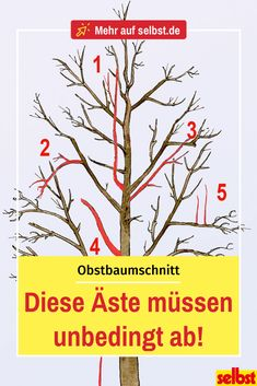 Obstbaumschnitt - Garden Care tips, Garden ideas,Garden design, Organic Garden Growing Tree, Growing Plants, Growing Vegetables, Pruning Fruit Trees, Tree Pruning, Garden Care, Garden Types, Garden Paths, Hydrangea Care