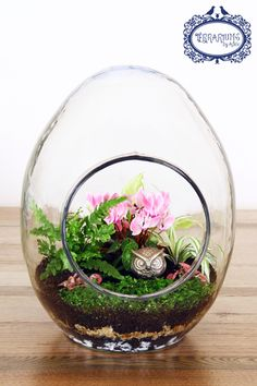 Custom made terrarium in egg shaped glass. Plants include Cyclamen, Fern, Ribbon Plant, Polka Dot Plant and Baby's Tears. Accessorised with solid silver owl. Follow Terrariums by Adele on Facebook.