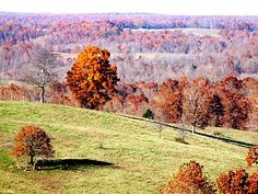 Images of Ozark County Missouri | Ozark County, View from US160 | Fall in the Missouri Ozarks