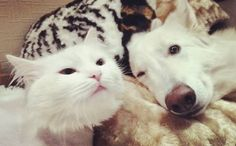 Double tap to like this  Follow @poussylifestyle and tag #poussylifestyle for your chance to be featured.  Free Cat Gift Set for Cat Lovers @poussylifestyle bio  #cat #cats #TagsForLikes #TagsForLikesApp #catsagram #catstagram #instagood #kitten #kitty #kittens #pet #pets #animal #animals #petstagram #petsagram #photooftheday #catsofinstagram #ilovemycat #instagramcats #nature #catoftheday #lovecats #furry #sleeping #lovekittens #adorable #catlover #instacat