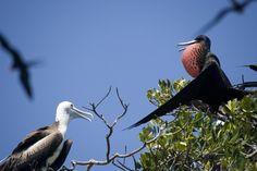 Birdwatch at Hopkins Bay Belize http://www.hopkinsbayresort.com