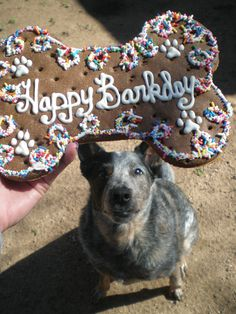 Pleese, pleees, pleeeese!  It's my Barkday!  PeaMutt Butter & Carob Bone with Vanilla Yogurt, available daily or call 512-891-7333 for customization.