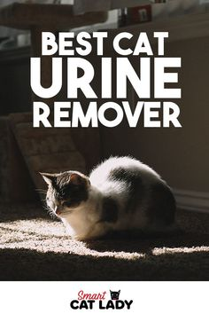 Cat pee is the worst but even more so when it is in your furniture! Here's our pick on the best cat urine remover that will surely get rid of dried pee in your carpet, couch and other furniture.    #cat #urine #furniture