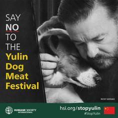 Dog-meat festival must be stopped, say celebrities #dogs #Yulin #StopYulin #dogsmeatfestival #RickyGervais