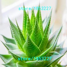 100pcs Vegetables and fruit seeds Aloe vera seeds edible beauty Edible cosmetic Bonsai plants Seeds for home & garden 49%