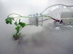 bottle planters, recycled bottle planters, hanging planters, diy planters, how to make a bottle planter, soda bottle planter, recycled materials, green gardening, eco gardening