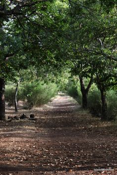 Pathway by islandmommacanarias, via Flickr