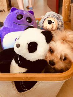 My Children, Teddy Bear, Toys, Animals, Activity Toys, My Boys, Animales, Animaux, Clearance Toys