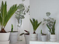HUONEKASVIT Scandinavian interior style Plants