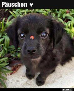 Päuschen ♥.. | Lustige Bilder, Sprüche, Witze, echt lustig Cute Dogs Breeds, Cute Dogs And Puppies, Dog Breeds, Doggies, Puppies Tips, Lab Puppies, Cute Animals Puppies, Collie Puppies, Teacup Puppies