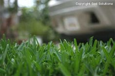 Lawn Watering and Irrigation Tips