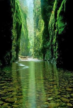 Oneonta Gorge, Oregon - 10 Secret Places in America That Most Tourists Don't Know About Dream Vacations, Vacation Spots, Secret Places, Hidden Places, Adventure Is Out There, Belle Photo, The Great Outdoors, Places To See, Scenery