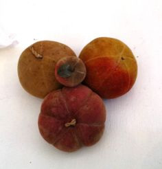Rare & Fantastic 19thc Velvet Therom Fruit Collection On Compote image 8