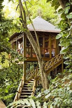 Kanopi House, Τζαμάικα