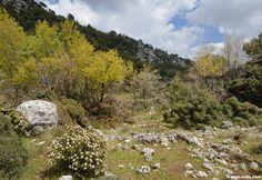 Spring in Omalos  - Crete