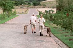 Peaches & Bontle Peaches, Cheetah, South Africa, Life, Peach, Cheetahs, Jaguar