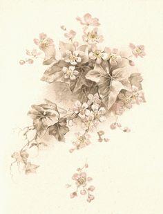 vintage clip art flowers   ... Flower Clip Art: Vintage Illustration of White Flowers and Ivy Leaves