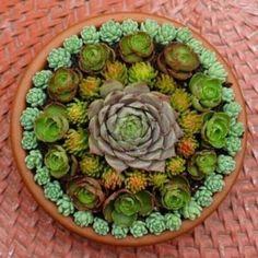 Succulent mandala