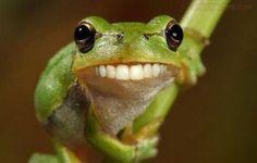 Resultado de imagen de rana