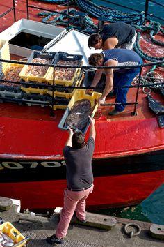 Retour de pêche. Bretagne.