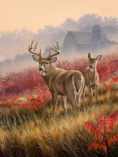A593457065: Lifting Fog-Whitetail Deer Painting by Rosemary Millette