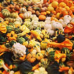 #farmersmarketnyc - Union Square Greenmarket via mdepaula9 on Instagram - #Manhattan has oodles of #squash #gourds and #minipumpkins