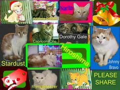 These cats/kittens desperately need a save by 3pm Mon 22/12/14. If you are a rescue or know a rescue that can help to contact Renbury Farm Animal Shelter, NSW