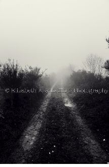 Dream Tree Road by Elizabeth A. Schaffner Photography #photography #travel #Roads #Farms #BlackandWhite #Foggy #Landscape #France #Lost