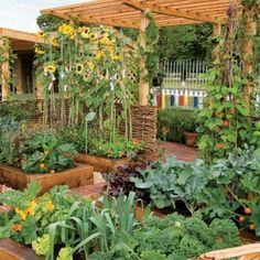 Organic Gardening, Organic Gardening Tips and Tricks, How to Start Organic Gardening, Organic Gardening for Beginners, How to Start Vegetable Gardening, Vegetable Gardening Tips and Tricks, Gardening, Gardening Hacks, Popular Pin