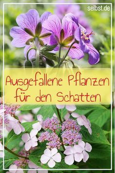 Schattenpflanzen Full sun does not like so many # plants: Many # flowering plants appreciate the – and then bloom especially beautiful & lush! These plants belong in EVERYONE Container Gardening, Gardening Tips, Shadow Plants, Clean Out, Pot Plante, Tree Sculpture, Art Sculptures, Organic Fertilizer, Garden Care
