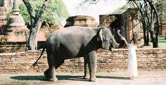 Elephant – Momento Cativo Fotografia