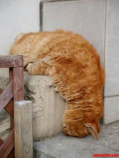 sleeping cat - advantage for cats - kitty cats - what kind of cat do i have - why cats are better than dogs - pics of cats - cat health - cat at work - funny cats picture Funny Cats, Funny Animals, Cute Animals, It's Funny, I Love Cats, Cool Cats, Chat Bizarre, Kittens Cutest, Cats And Kittens