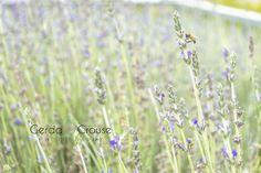 Bees and Lavender, beautiful light Beautiful Lights, Bees, Lavender, Plants, Bee, Plant, Planting, Planets, Lavandula Angustifolia