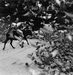 Graciela Iturbide » Pájaros