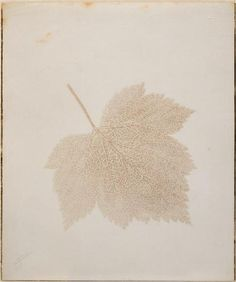 #leaf #nature #vintage