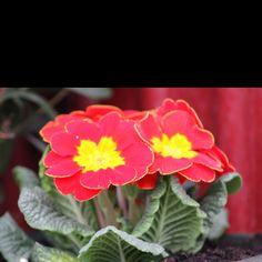 My Style, Plants, Planters, Plant, Planting