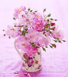 Gek op rozen
