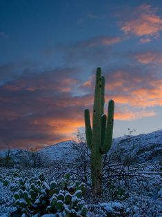 Winter - Tucson, Arizona