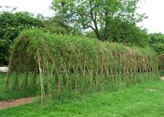 living willow archway.  just clip green willow wisps, plant in the ground, arrange in an arch, and watch it continue to grow year after year..  :)