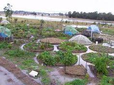 """Résultat de recherche d'images pour """"mandala garden"""""""