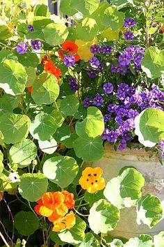 Garten 2012 - die Top Five meiner Gartentipps