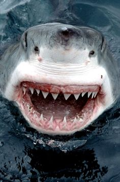 I am so fascinated by these animals. This shark is both horrifying and thrilling to look at.