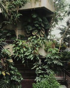 e reckon that 1 day of this place a week just isn't enough. Hands up if you think the Barbican Conservatory should be open for longer? Monstera Deliciosa, Barbican Conservatory, Plant Aesthetic, Plants Are Friends, Nature Plants, Garden Projects, Planting Flowers, Greenery, Architecture