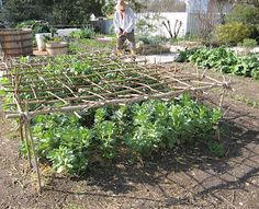 support...great idea for broad beans