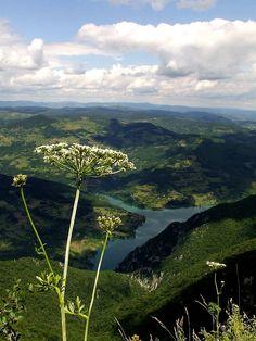 "Zarko Drincic - Fennel ~ Taken on Tara mountain from ""Predov krst"""