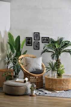 Plant Stand Design Ideas for Indoor Houseplants - Page 39 of 67 - LoveIn Home Living Room Chairs, Interior Design Living Room, Living Room Decor, Interior Decorating, Dining Room, Decoration Cactus, Decoration Plante, House Plants Decor, Plant Decor