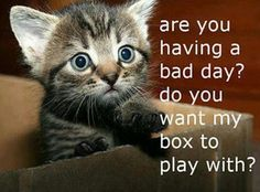 I love cute kittens and this kitten is cute. Do you want my box to play with? Cute Animal Quotes, Funny Animal Pictures, Funny Animals, Cute Animals, Animal Memes, Cute Kittens, Cats And Kittens, Cats Meowing, Crazy Cat Lady