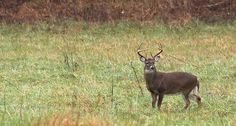 Stop hunting deer and start hunting mature bucks with these tips. http://www.wideopenspaces.com/heres-how-to-stop-hunting-deer-and-start-hunting-mature-bucks/